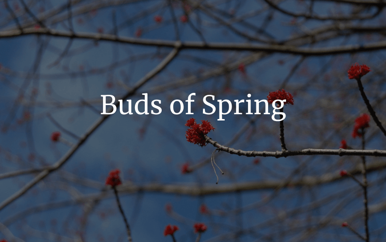 featured image for buds of spring